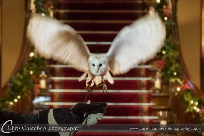 Wedding ring delivery by Barn Owl. Allerton Castle wedding photography